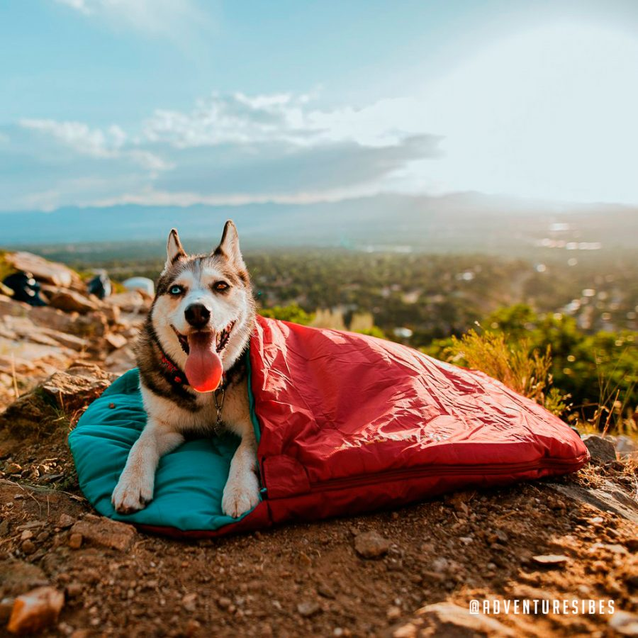 Wilderdog   Trail Industries   Born to Explore   Dog Sleeping Bag